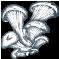 Champignons déshydratés sauvages